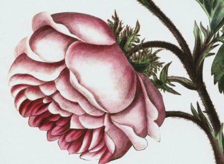 NYBG Annual Rose Garden Dinner Dance Invitation
