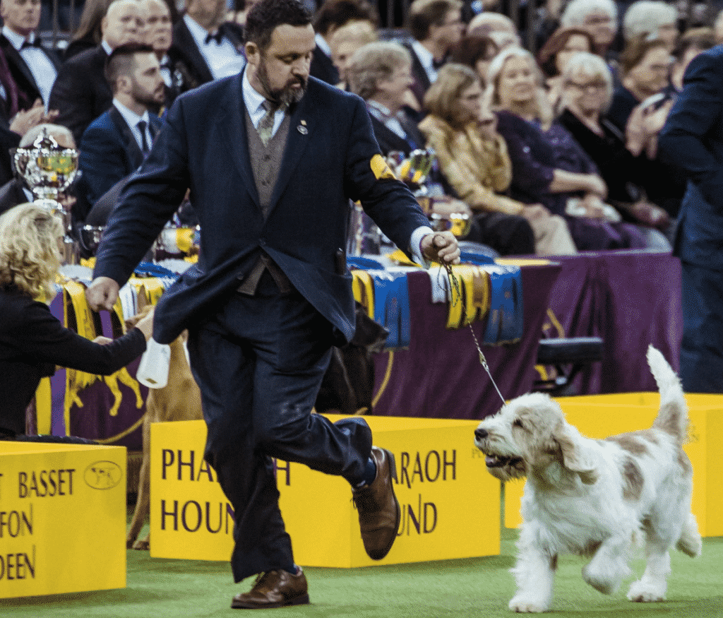 The New York Times, Westminster Dog Show